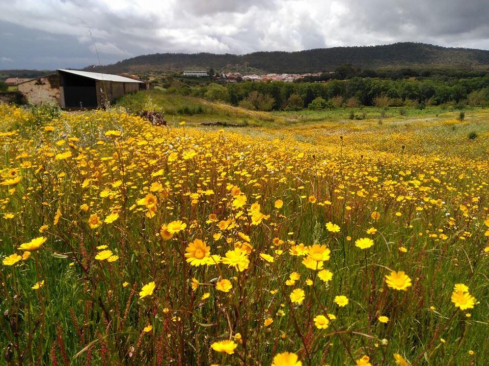 entorno rural margaritas