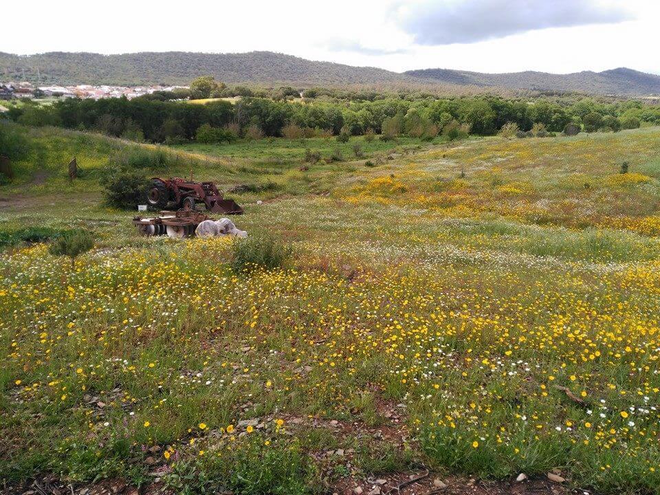 entorno rural campo 1